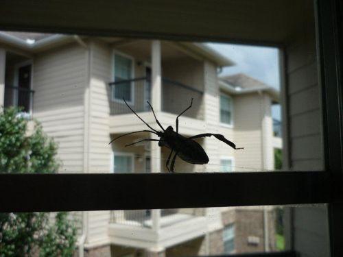 Я вообще уже отвыкла от тараканов.  Очень боюсь всяких жуков и...