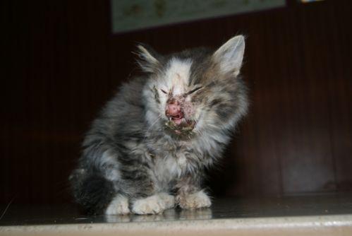 котенок мышкин фото после операции
