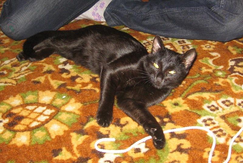 Котенок-чертенок ищет семью IMG_0132-1