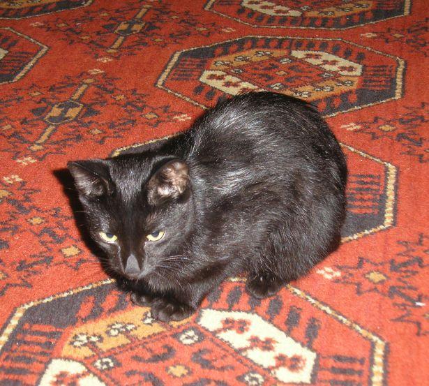 Котенок-чертенок ищет семью P8300008-1