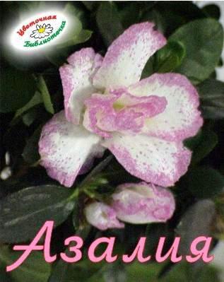 С днем рождения открытка с именем азалия